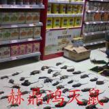 供应桂林酒店灭鼠、饭店灭鼠、灭鼠方法