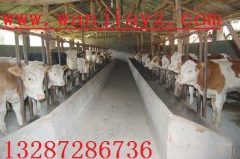 架子牛肉牛肉牛犊价格肉牛饲养管理技术