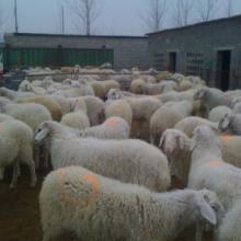 万家养殖总公司供应牛羊驴新价格