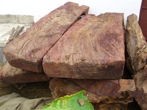 供应红豆杉工艺原料