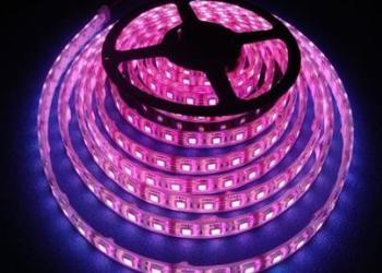 滴胶防水5050LED软灯条厂家图片