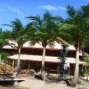 高仿真椰子树一图片
