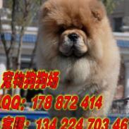 广州市区那里有卖松狮幼犬图片