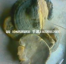 供应蚕茧蚕壳蚕衣价格