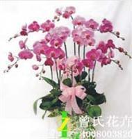 成都植物租赁植物租摆【曾氏花卉】月季和蔷薇怎么区分