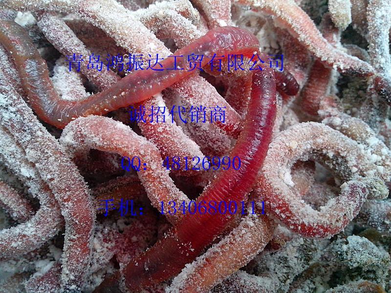供应钓饵黑鲷鳗鱼海鲋专杀冻红虫500克