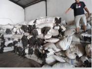 供应印尼海参饲料原料马尾藻原料海藻粉