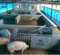 供应母猪精确饲喂设备养猪好帮手