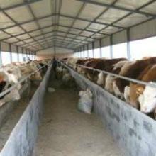 肉牛常用饲料的调制