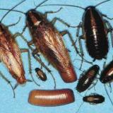 供应上海专业灭虫,上海专业灭虫电话,上海专业灭虫上门服务