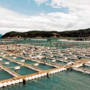 湖南网箱养殖塑料浮球批发图片