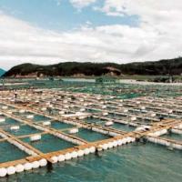 供应湖南网箱养殖塑料浮球批发网箱养殖塑料浮球采购