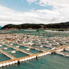 供应渔网具产品