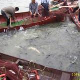 供应湖南拉网生产厂家批发价格/湖南沅江市渔业用品有限公司