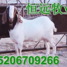 供应恒羊养殖波尔山羊的小麦秸秆草粉批发