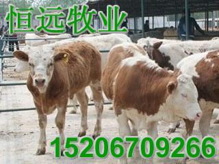 供应陕西肉牛陕西肉牛陕西肉牛陕西肉牛