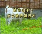 长乐市哪里有卖羊图片