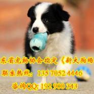 购犬送狗狗用品专业图片