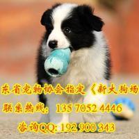 购犬送狗狗用品专业
