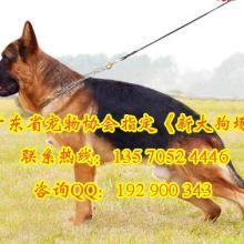 供應購犬送狗狗用品專業繁殖出售德國牧羊犬幼犬包純種健康簽協議圖片