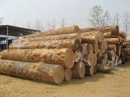供应木材木10图片