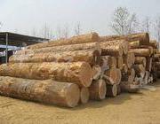 木材木10