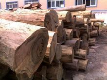 供应木材图片