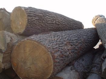供应原木木材种类进口服务图片