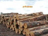 非洲木材进口至国内报关所需时间木材进口清关费用图片