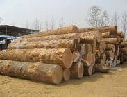 木材进口报关清关图片
