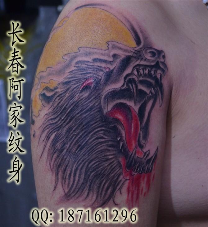 供应狼头纹身,狼纹身图片