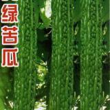 杂家抗病苦瓜种子/高产苦瓜种子销售批发寿光绿兴种苗 苦瓜种子 美绿苦瓜种子