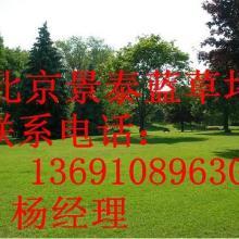 卖草坪服务铺草坪密云草坪销售北京石景山卖草皮批发