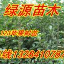 123苹果苗图片