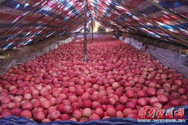 陕西红富士苹果价格销售