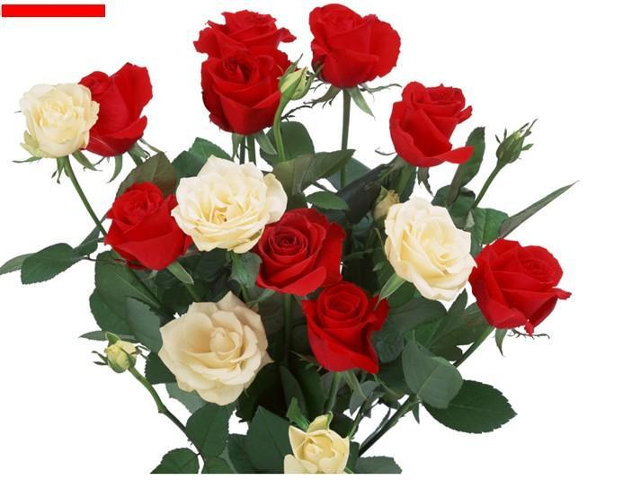 上海玫瑰花