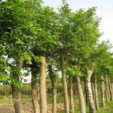 北方绿化苗木基地