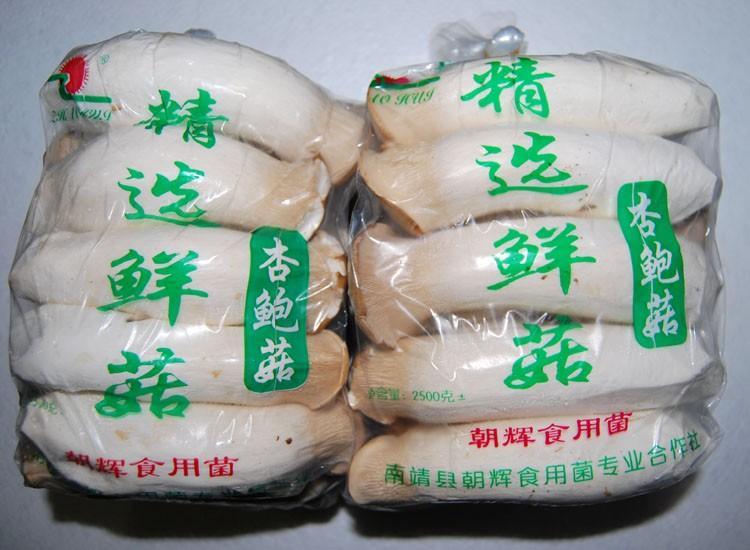 食用菌杏鲍菇
