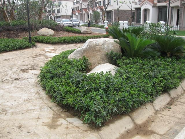 黄蜡石草坪用石园林石刻字石图片|黄蜡石网页室内设计软件常用有哪些草坪图片