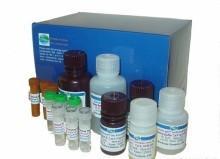 供应小鼠17-酮类固醇ELISA试剂盒