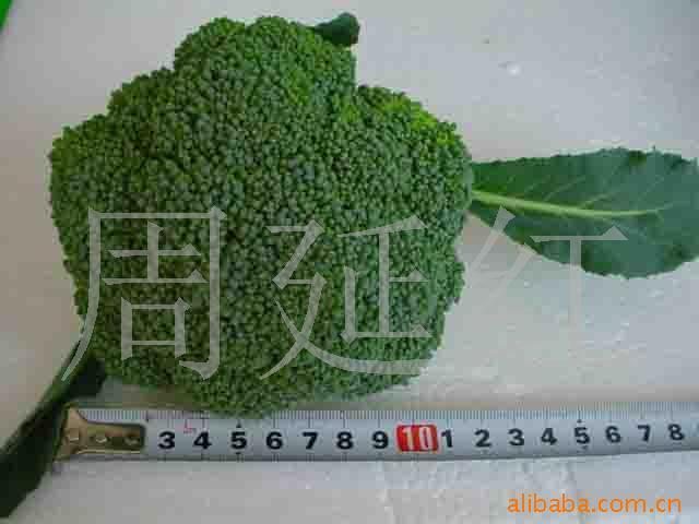 青岛新鲜蔬菜图片/青岛新鲜蔬菜样板图 (3)