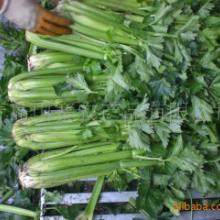 供应出口新鲜蔬菜批发