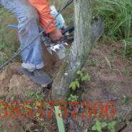 供应伐木机锯木机油锯质量保证伐木机