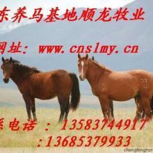 养马繁殖基地