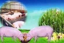 供应成都蔬菜肉类配送送货上门价格最低13648087153批发