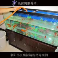 郑州鱼缸清洗鱼缸造景图片