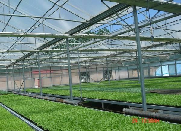 大棚价格_草莓温室大棚报价_潍坊市超值的草莓大棚哪有