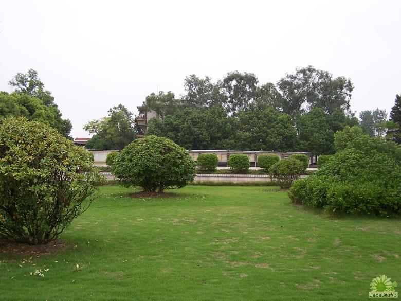 高尔夫球场草坪