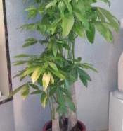 绿植出租办公室花木出租花草保养图片
