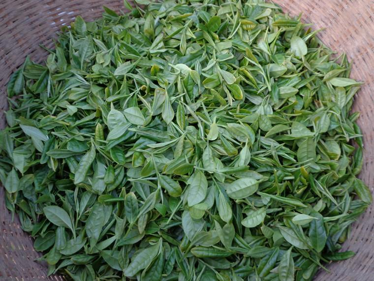 供应正宗西湖主产区的精品龙井茶图片